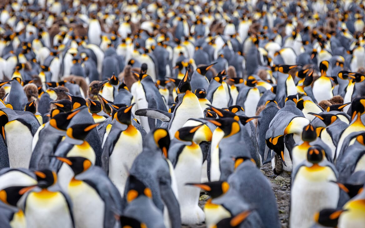 Motor Yacht SCENIC ECLIPSE Penguins